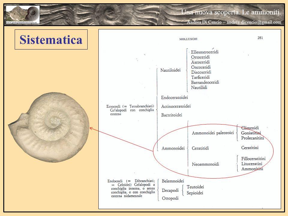Sistematica Una nuova scoperta. Le ammoniti.