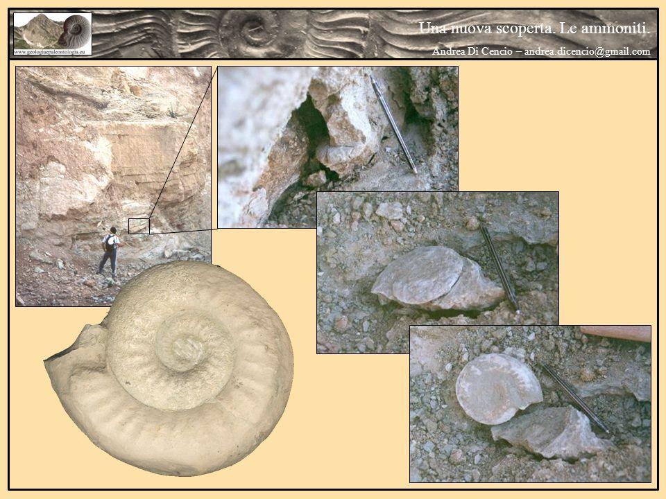 Una nuova scoperta. Le ammoniti.