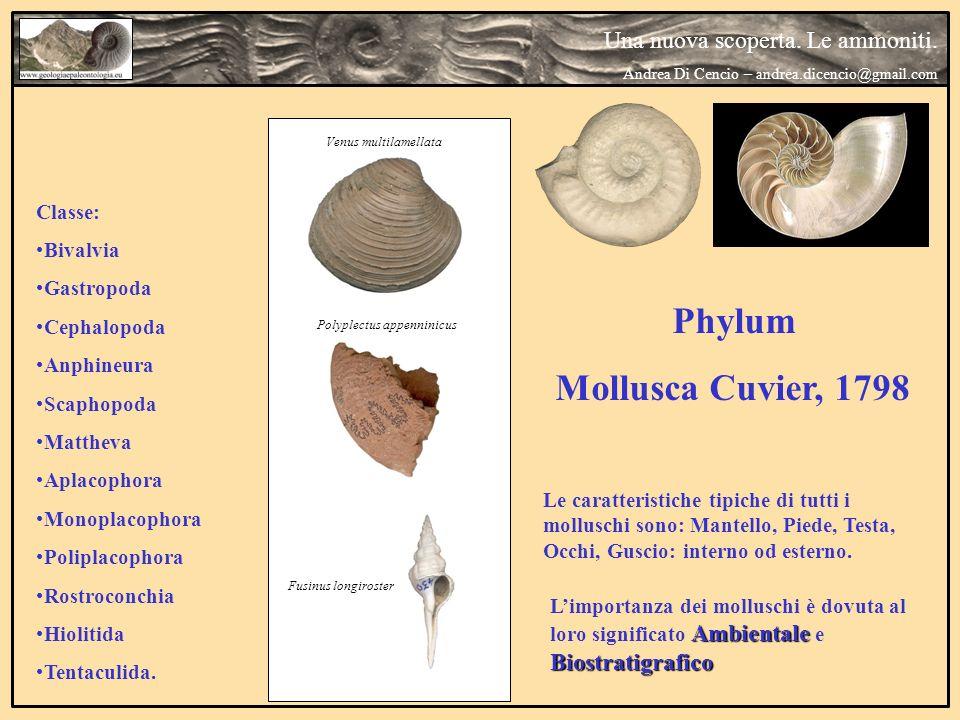 Phylum Mollusca Cuvier, 1798