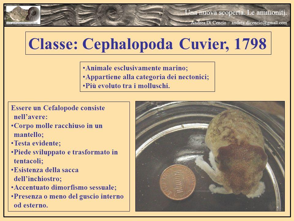 Classe: Cephalopoda Cuvier, 1798