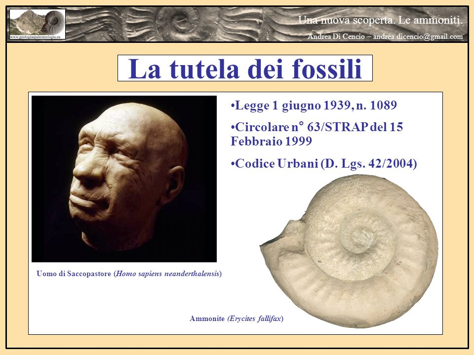 La tutela dei fossili Legge 1 giugno 1939, n. 1089