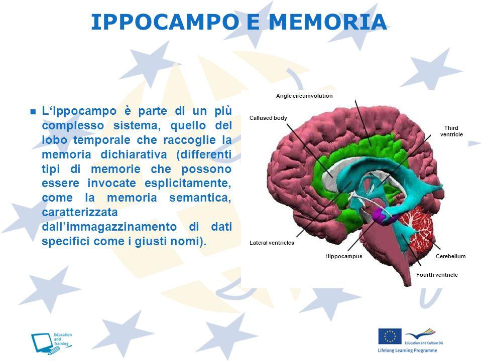 IPPOCAMPO E MEMORIAAngle circumvolution.