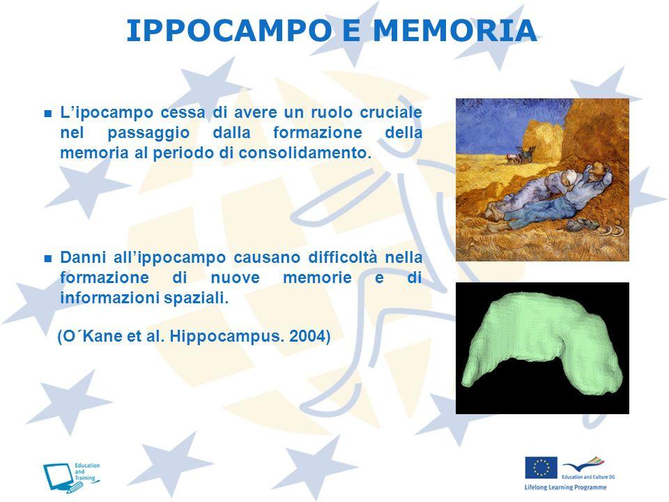 IPPOCAMPO E MEMORIAL'ipocampo cessa di avere un ruolo cruciale nel passaggio dalla formazione della memoria al periodo di consolidamento.