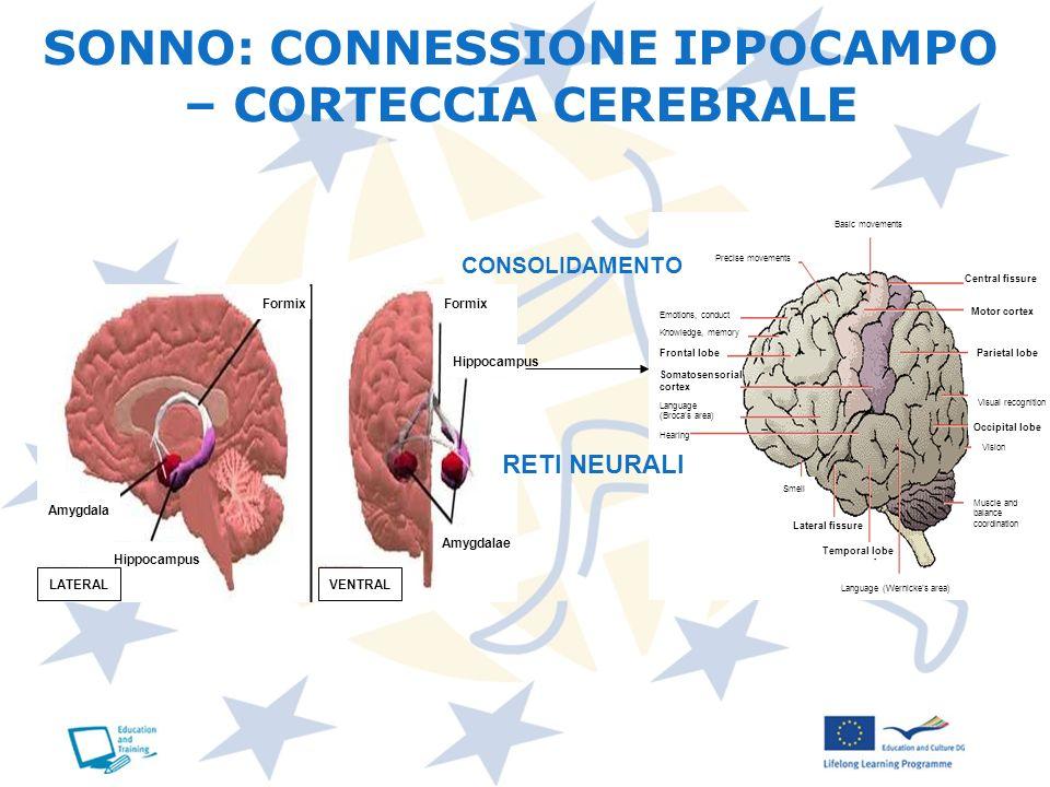 SONNO: CONNESSIONE IPPOCAMPO – CORTECCIA CEREBRALE