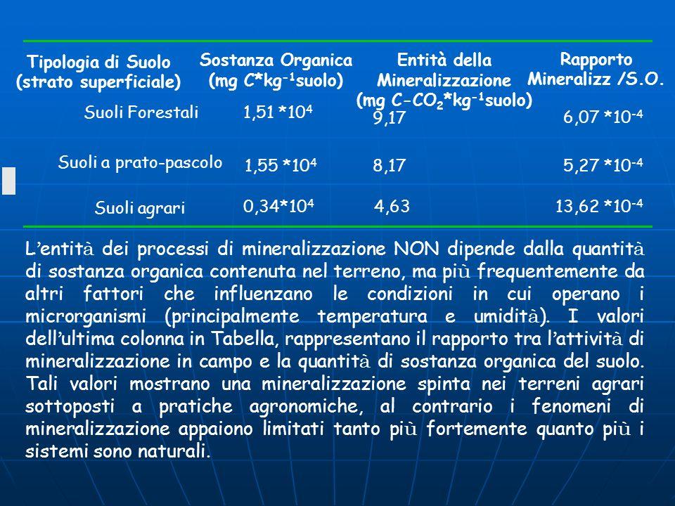 Rapporto Mineralizz /S.O.