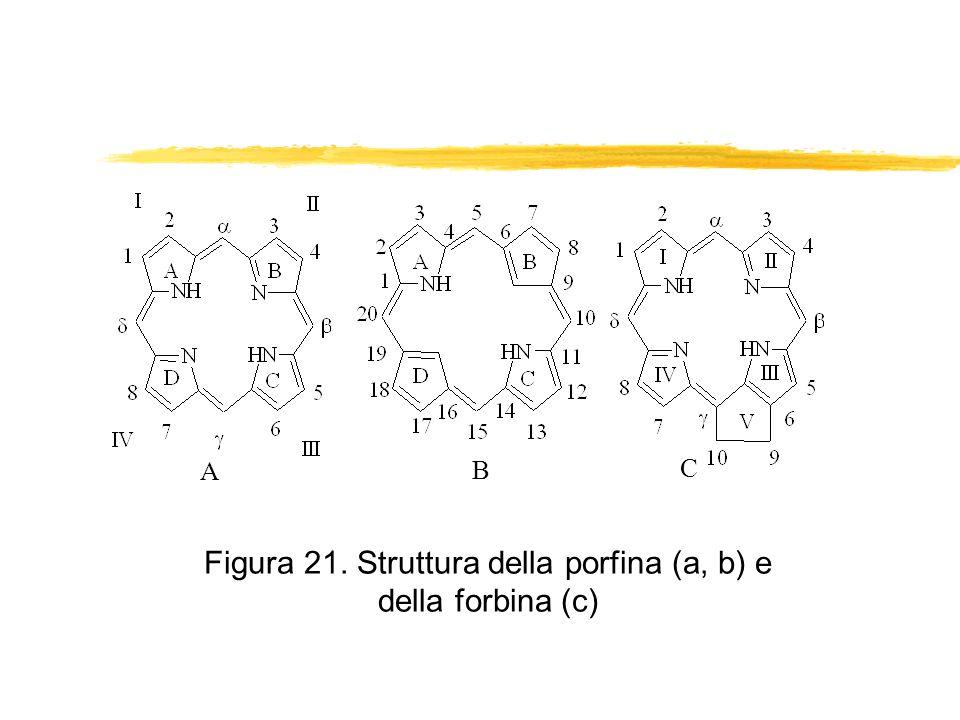 Figura 21. Struttura della porfina (a, b) e della forbina (c)