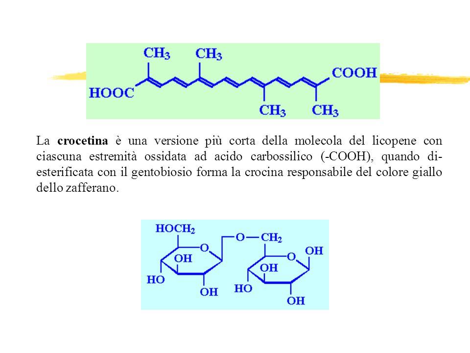 La crocetina è una versione più corta della molecola del licopene con ciascuna estremità ossidata ad acido carbossilico (-COOH), quando di-esterificata con il gentobiosio forma la crocina responsabile del colore giallo dello zafferano.
