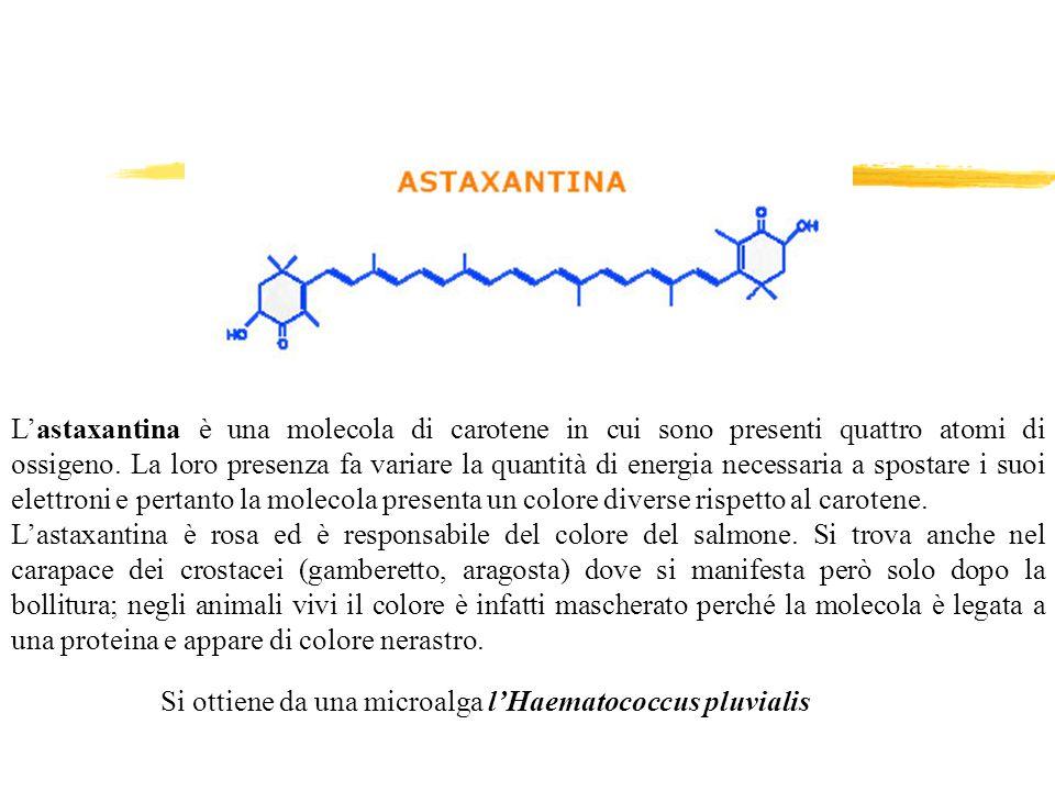 L'astaxantina è una molecola di carotene in cui sono presenti quattro atomi di ossigeno. La loro presenza fa variare la quantità di energia necessaria a spostare i suoi elettroni e pertanto la molecola presenta un colore diverse rispetto al carotene.