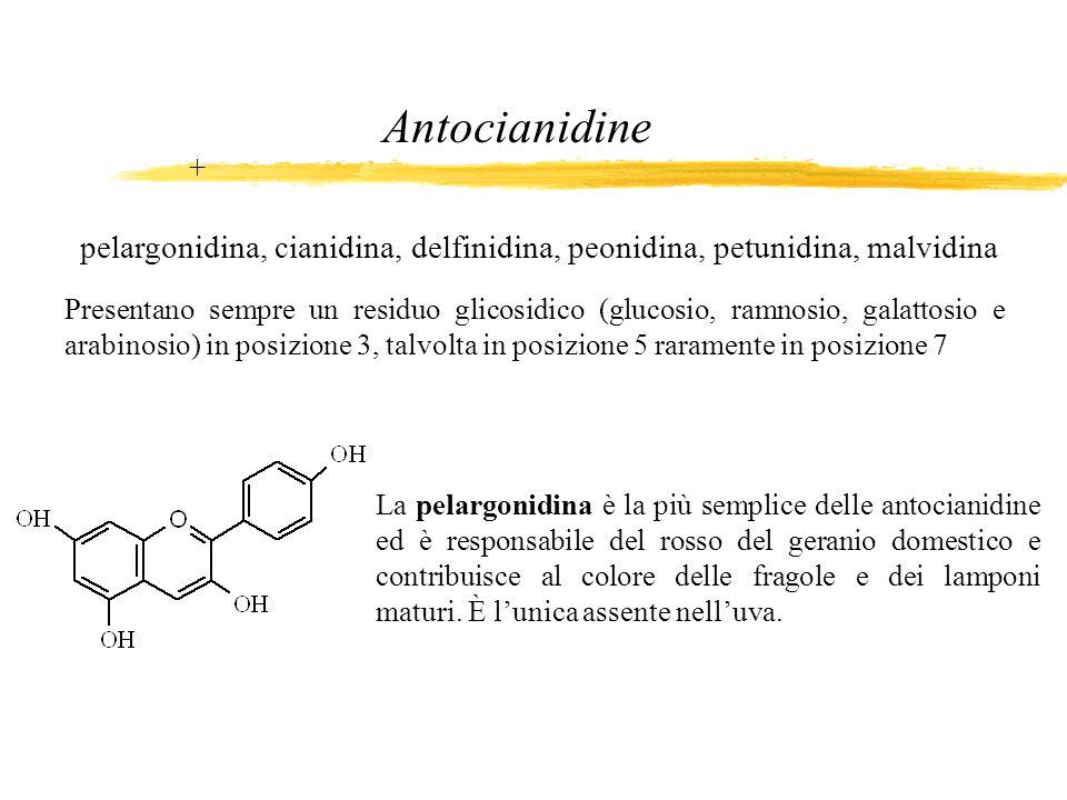 Antocianidine + pelargonidina, cianidina, delfinidina, peonidina, petunidina, malvidina.