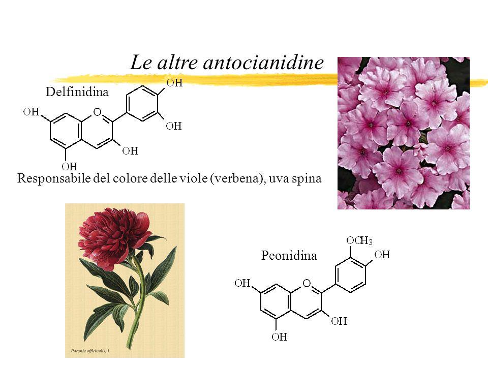 Le altre antocianidine