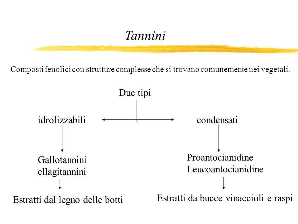 Tannini Due tipi idrolizzabili condensati Proantocianidine