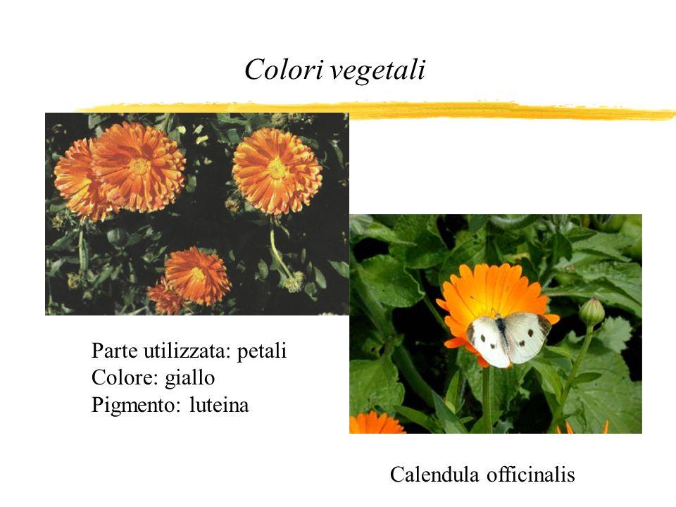 Colori vegetali Parte utilizzata: petali Colore: giallo