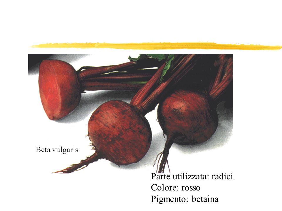 Parte utilizzata: radici Colore: rosso Pigmento: betaina