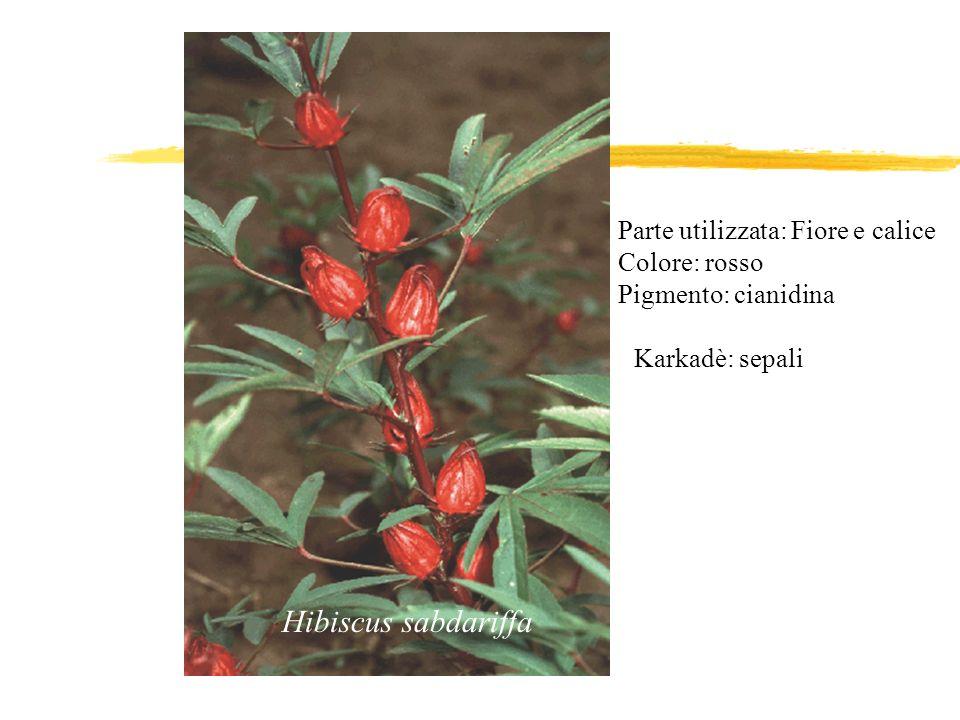 Hibiscus sabdariffa Parte utilizzata: Fiore e calice Colore: rosso