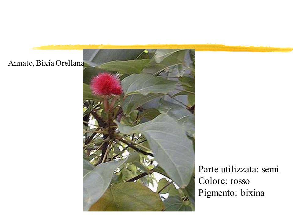 Parte utilizzata: semi Colore: rosso Pigmento: bixina