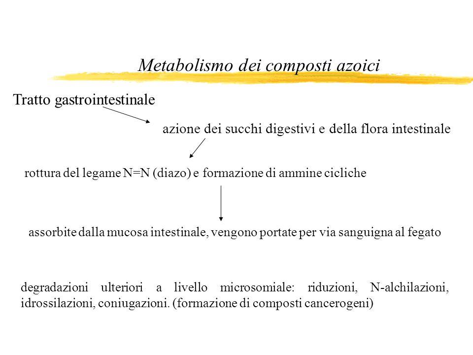 Metabolismo dei composti azoici