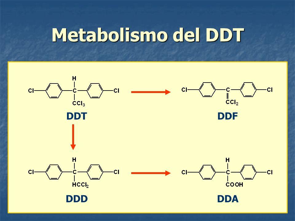 Metabolismo del DDT DDT DDF DDD DDA