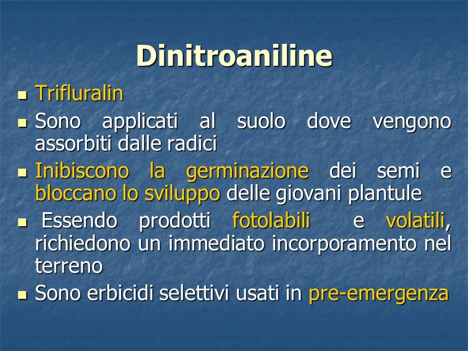 Dinitroaniline Trifluralin