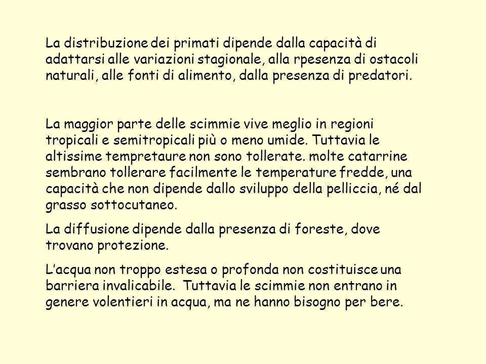 La distribuzione dei primati dipende dalla capacità di adattarsi alle variazioni stagionale, alla rpesenza di ostacoli naturali, alle fonti di alimento, dalla presenza di predatori.