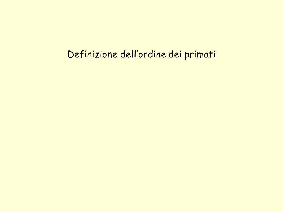 Definizione dell'ordine dei primati