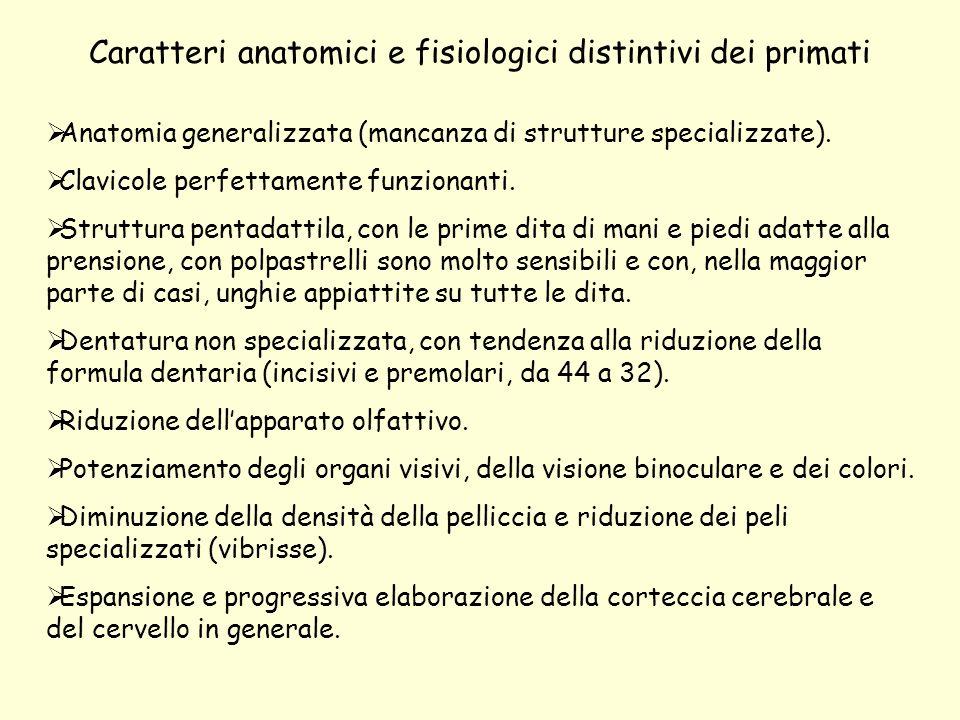 Caratteri anatomici e fisiologici distintivi dei primati