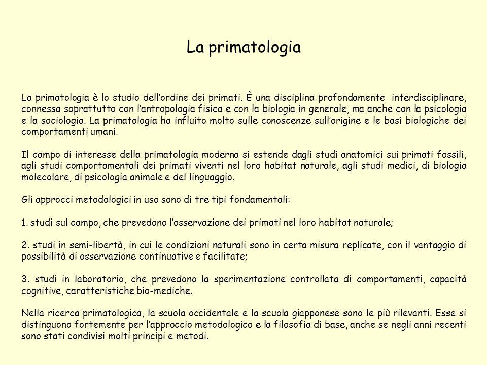 La primatologia