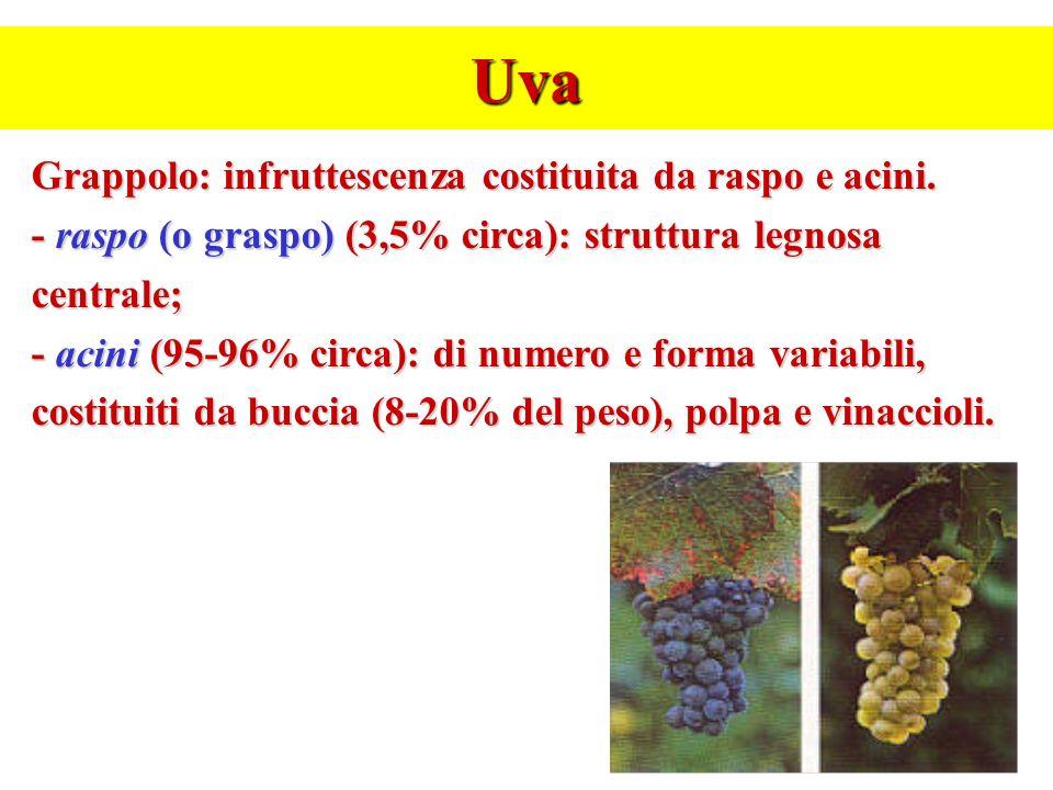 Uva Grappolo: infruttescenza costituita da raspo e acini.