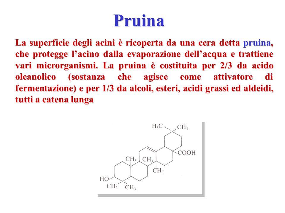 Pruina