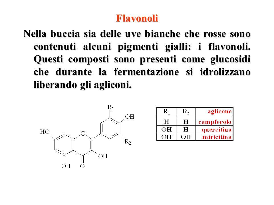Flavonoli