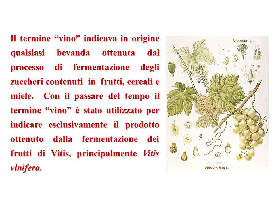 Il termine vino indicava in origine qualsiasi bevanda ottenuta dal processo di fermentazione degli zuccheri contenuti in frutti, cereali e miele.