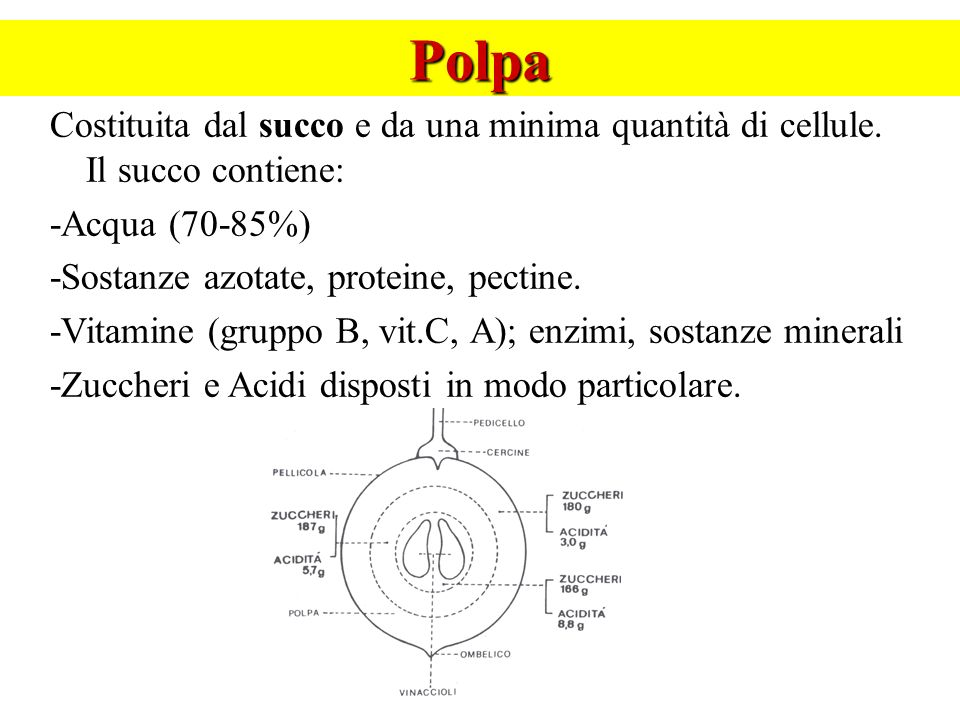 Polpa Costituita dal succo e da una minima quantità di cellule. Il succo contiene: -Acqua (70-85%)