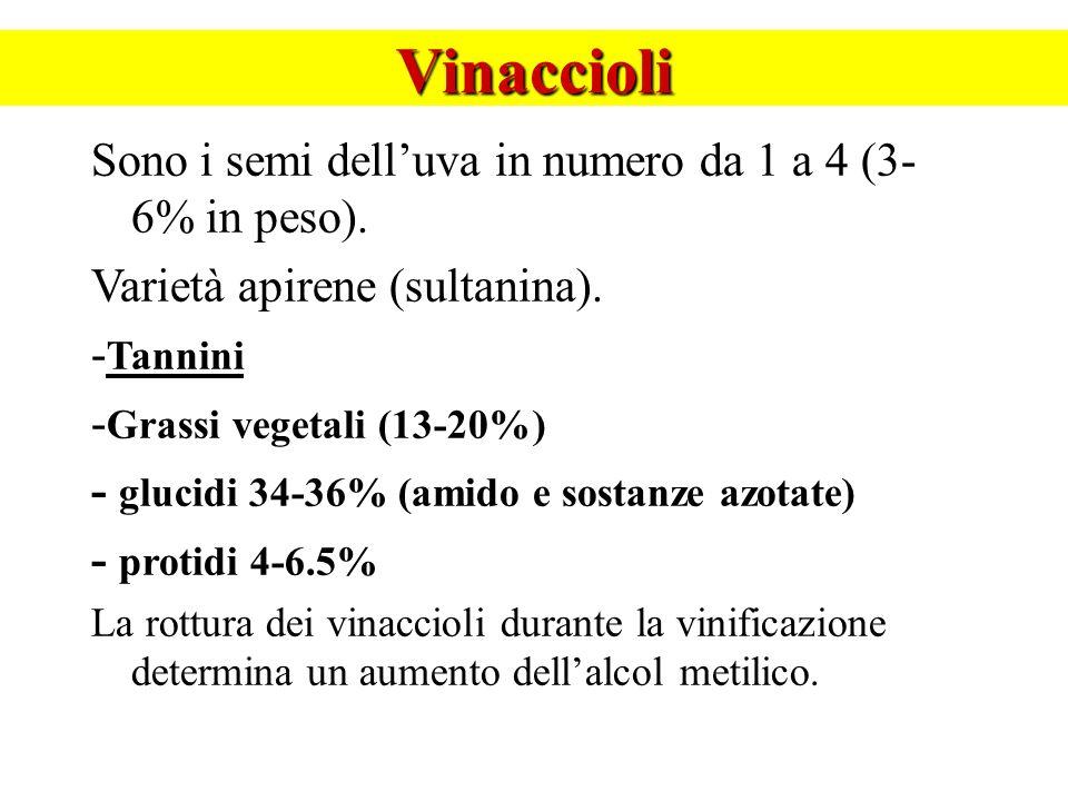 Vinaccioli Sono i semi dell'uva in numero da 1 a 4 (3-6% in peso).