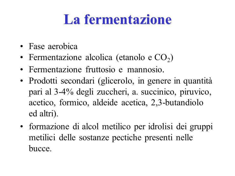La fermentazione Fase aerobica Fermentazione alcolica (etanolo e CO2)