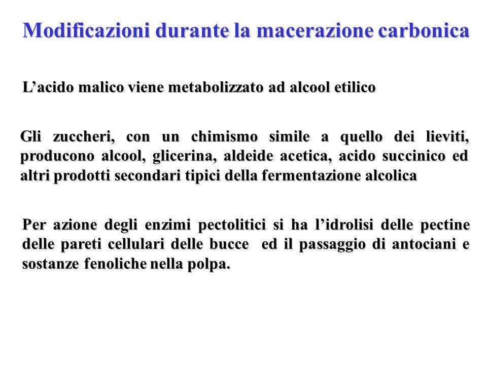 Modificazioni durante la macerazione carbonica