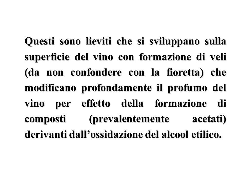 Questi sono lieviti che si sviluppano sulla superficie del vino con formazione di veli (da non confondere con la fioretta) che modificano profondamente il profumo del vino per effetto della formazione di composti (prevalentemente acetati) derivanti dall'ossidazione del alcool etilico.
