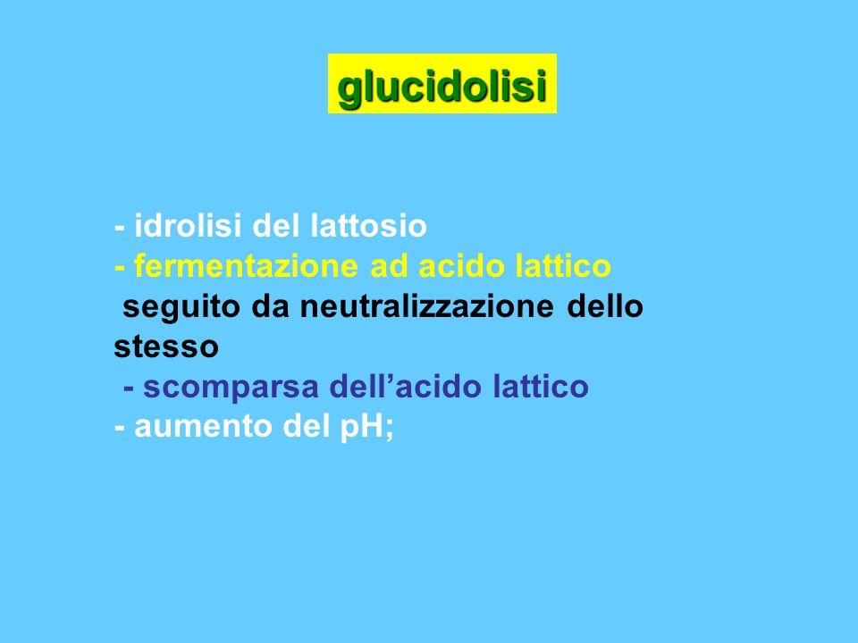 glucidolisi - idrolisi del lattosio - fermentazione ad acido lattico