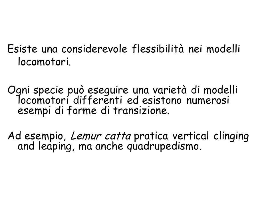 Esiste una considerevole flessibilità nei modelli locomotori.