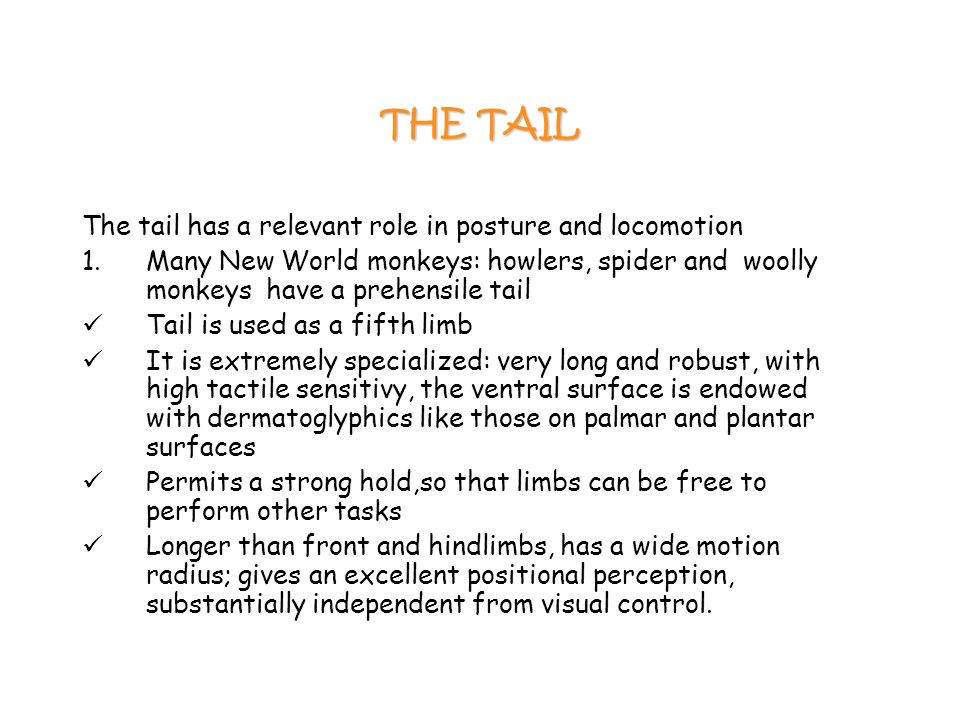 THE TAIL The tail has a relevant role in posture and locomotion