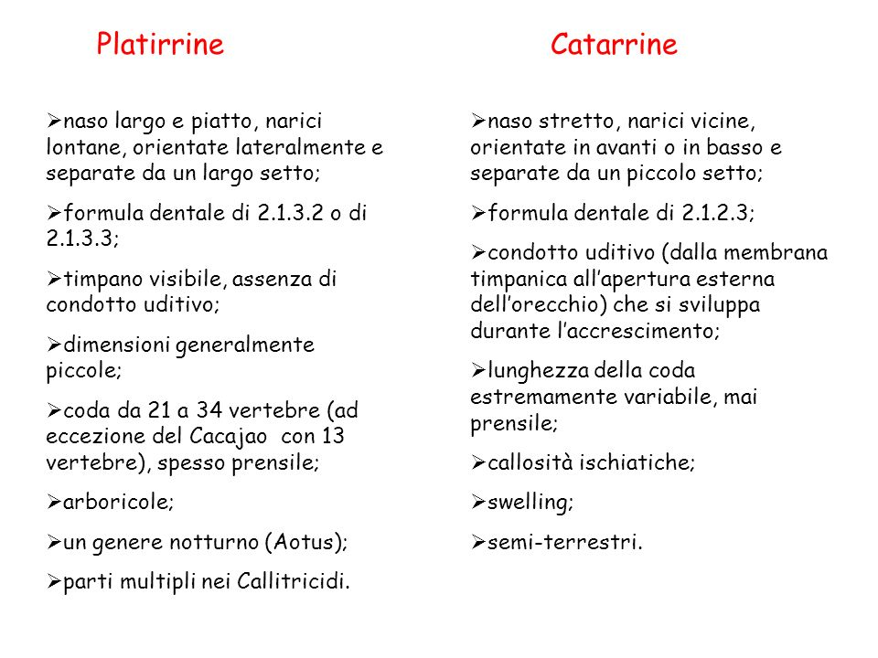 Platirrine Catarrine. naso largo e piatto, narici lontane, orientate lateralmente e separate da un largo setto;