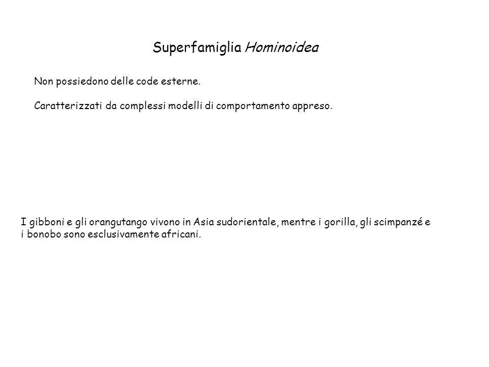 Superfamiglia Hominoidea