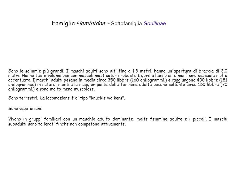 Famiglia Hominidae - Sottofamiglia Gorillinae