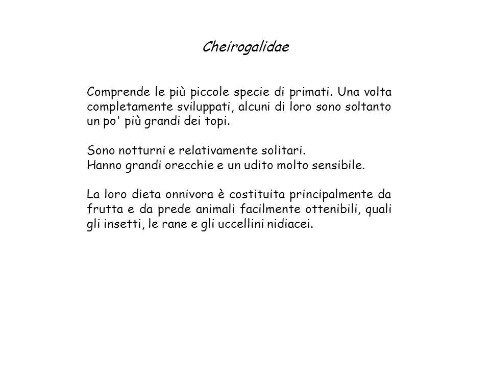 Cheirogalidae