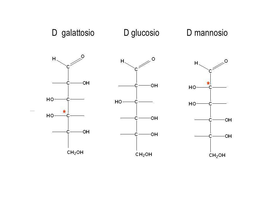 D galattosio D glucosio D mannosio