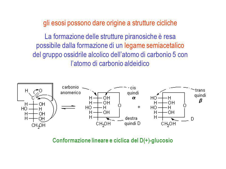 gli esosi possono dare origine a strutture cicliche
