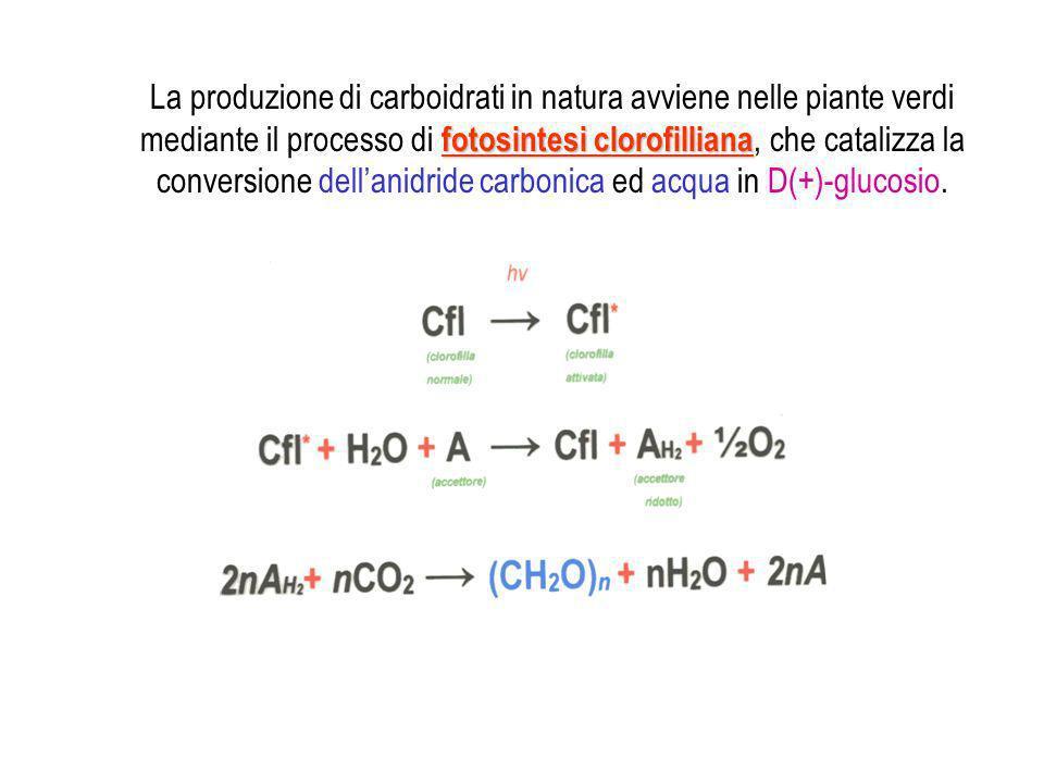 La produzione di carboidrati in natura avviene nelle piante verdi mediante il processo di fotosintesi clorofilliana, che catalizza la conversione dell'anidride carbonica ed acqua in D(+)-glucosio.