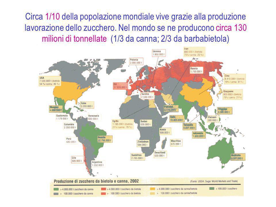 Circa 1/10 della popolazione mondiale vive grazie alla produzione lavorazione dello zucchero.