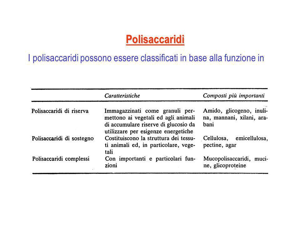 Polisaccaridi I polisaccaridi possono essere classificati in base alla funzione in