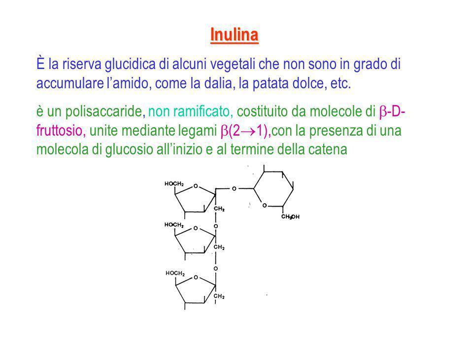 InulinaÈ la riserva glucidica di alcuni vegetali che non sono in grado di accumulare l'amido, come la dalia, la patata dolce, etc.