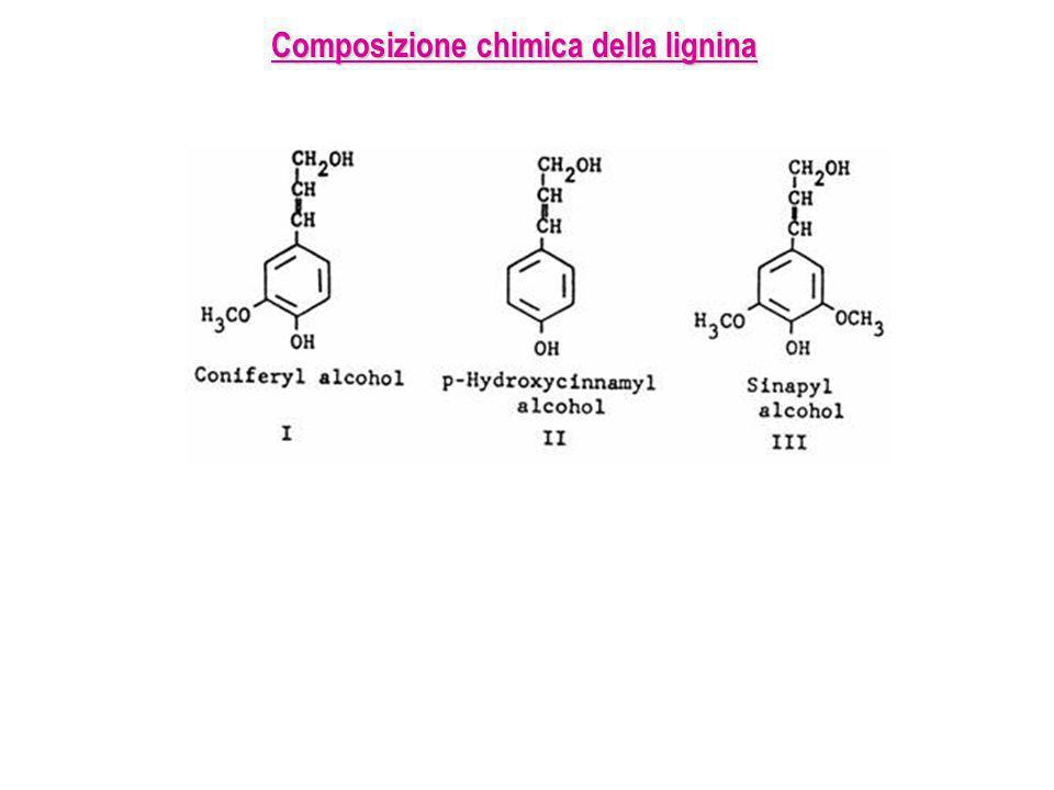 Composizione chimica della lignina