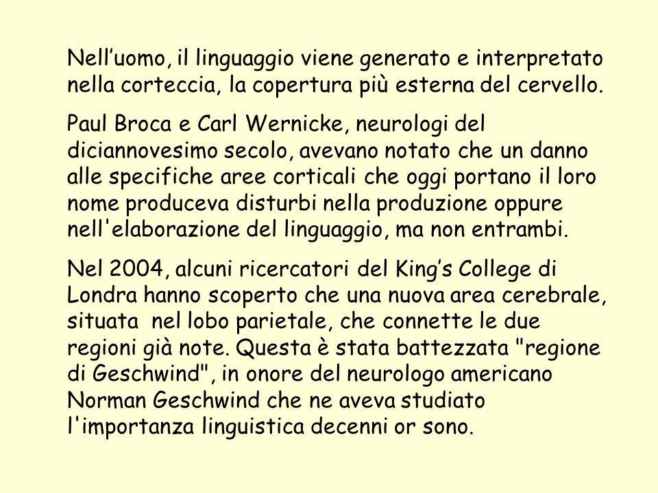 Nell'uomo, il linguaggio viene generato e interpretato nella corteccia, la copertura più esterna del cervello.